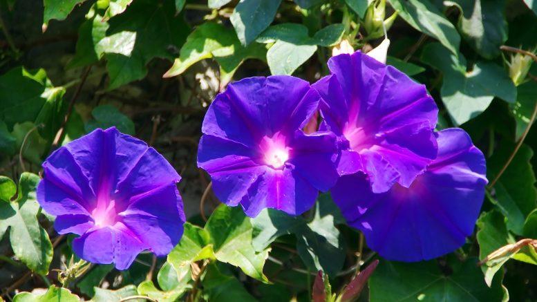 plante verte, jardinerie en ligne